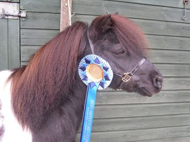 Snelsmore Sponsorship: Best gelding rosettes for Judy with Pagan and Drifter
