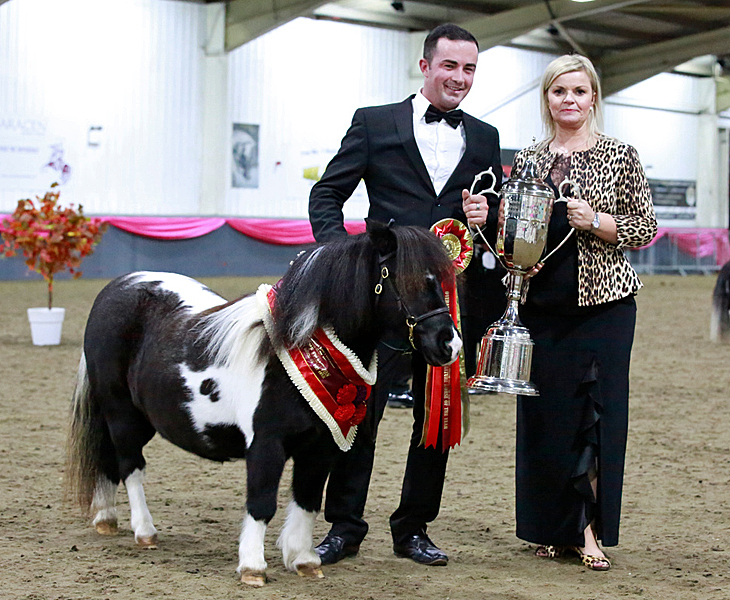 IMHPS Show: Supreme of show for Snelsmore Lily.
