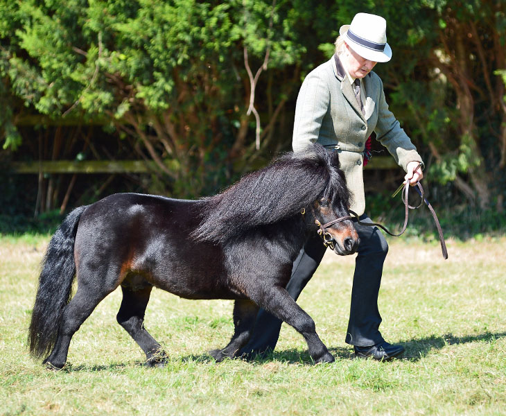 Stretcholt Equestrian centre: A worthwhile Journey south